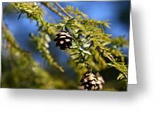 Pine Cone Blues Greeting Card