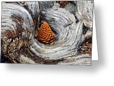 Pine Cone In A Knot  Greeting Card