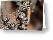 Pine Cone Perfection Greeting Card