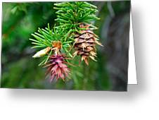 Pine Cone Stages Greeting Card