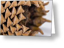 Pine Cone Study 16 Greeting Card