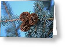 Pine Cones Greeting Card