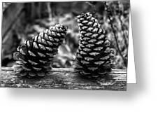 Pine Cones Talking  Greeting Card