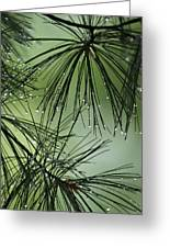 Pine Droplets Greeting Card