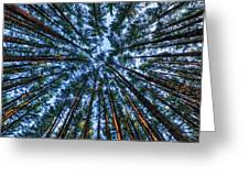 Pine Explosion Greeting Card