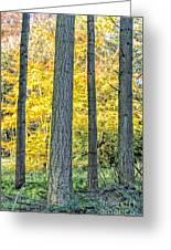Pine Forest In The Autumn Greeting Card