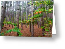 Pine Forest With Autumn Color Greeting Card