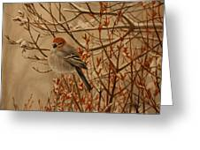 Pine Grosbeak Greeting Card by Tammy  Taylor