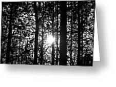 Pine Grove I Greeting Card
