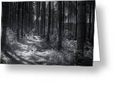 Pine Grove Greeting Card