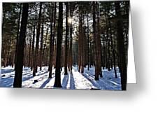 Pine Grove Vii Greeting Card