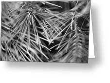 Pine Needle Abstract Greeting Card