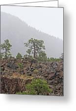 Pine On Lava Greeting Card