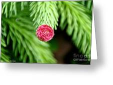 Pine Perfection Greeting Card
