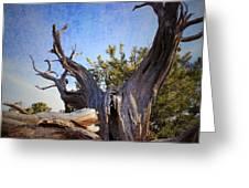 Pine Relic Greeting Card