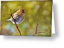 Pine Siskin - Digital Paint Greeting Card