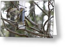 Pine Siskins In Flight Greeting Card