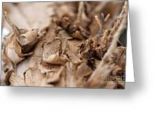 Pine Sprig Greeting Card