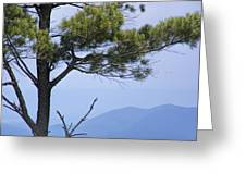 Pine Tree Along The Blue Ridge Parkway Greeting Card