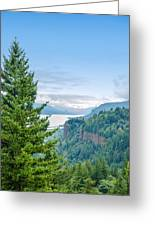 Pine Tree And Columbia River Gorge Greeting Card