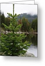 Pine Tree And Rain Drops Greeting Card