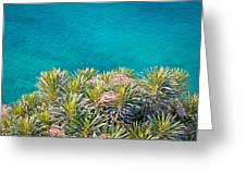 Pine Tree Branches With Turquoise Sea Background Greeting Card