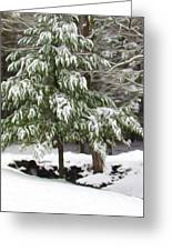 Pine Tree Covered With Snow 2 Greeting Card