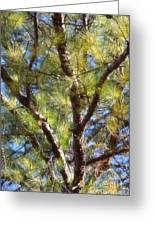 Pine Tree Glow 2014 Greeting Card
