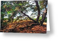 Pine Tree In Hoge Veluwe National Park 2. Netherlands Greeting Card