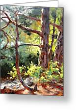 Pine Trees In Sunlight Greeting Card