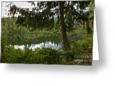 Pine Trees Over Starvation Lake Greeting Card