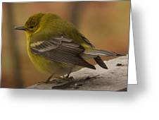 Pine Warbler Greeting Card