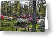 Pinecrest Gardens Greeting Card