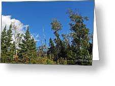 Pines In The Sky Greeting Card