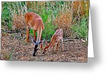 Piney Mountain Doe And Fawn Greeting Card