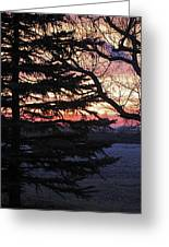 Piney Sunset Greeting Card