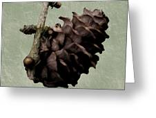 Pining Cone Greeting Card