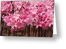 Pink Amaryllis Greeting Card by Denice Breaux