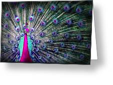 Pink And Blues Peacock Greeting Card by Diana Shively