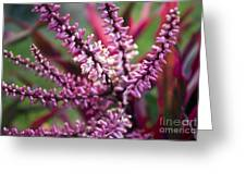 Pink And Cream Cluster Bloom Greeting Card