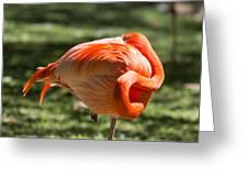 Pink And Orange Ball Greeting Card