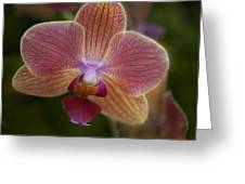 Pink And Orange Orchid Greeting Card