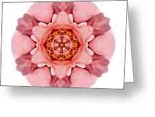 Pink And Orange Rose Iv Flower Mandala White Greeting Card