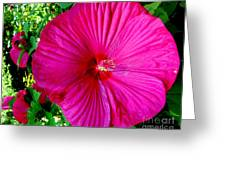 Pink And Pretty Greeting Card