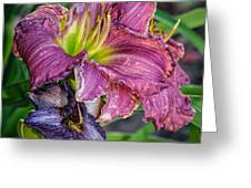 Pink And Purple Lily's Greeting Card