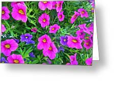 Pink And Purple Petunias Greeting Card