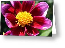 Pink And Red Dahlia Greeting Card
