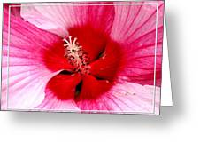 Pink And Red Hibiscus Flower Greeting Card