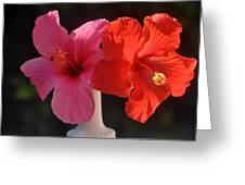 Pink And Red Hibiscus Greeting Card