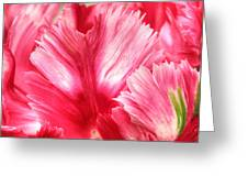 Pink And Red Parrot Tulip Greeting Card